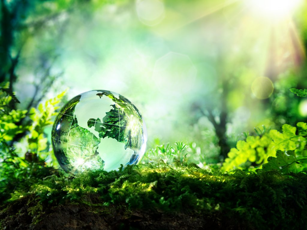 Faculty Research: Environmental Studies
